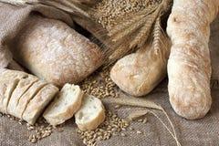 Świeżo piec tradycyjny ciabatta chleb zdjęcia royalty free