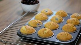 Świeżo Piec Wyśmienicie Muffins z wiśnią w wypiekowej niecce zdjęcie wideo