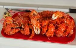 Świeżo przygotowany Kamchatka krab na tacy zdjęcie royalty free