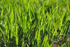 świeżo trawa Zdjęcia Stock