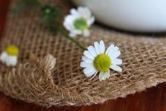 Świeżo Ukradzeni Chamomile kwiaty obrazy royalty free