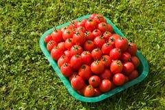 świeżo ukradzeni czerwoni pomidory Zdjęcia Royalty Free