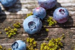 Świeżo ukradzione czarne jagody na stole, desce wieśniaka/ Obraz Stock