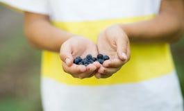 Świeżo ukradzione dzikie czarne jagody w boy's rękach Zdjęcia Royalty Free