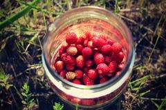 Świeżo ukradzione dzikie truskawki Fotografia Stock