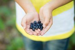 Świeżo ukradzione organicznie czarne jagody w kid's rękach Zdjęcie Royalty Free
