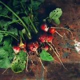 Świeżo ukradzione organicznie czerwone rzodkwie na drewnianym stole Zdjęcia Stock