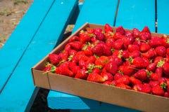 Świeżo ukradzione organicznie truskawki na pyknicznym stole Fotografia Stock