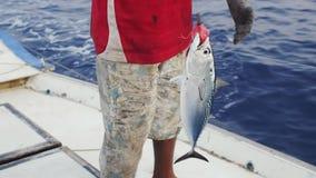 Świeżo Złapany Dogtooth tuńczyk zbiory