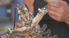 Świeżo złapany homar zdjęcie wideo