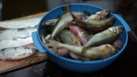 Świeżo złapany rybi jazgarz zbiory