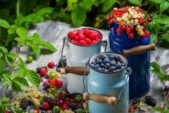 Świeżo zbierać dzikie jagodowe owoc Obrazy Royalty Free