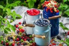 Świeżo zbierać dzikie jagodowe owoc Fotografia Stock