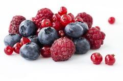 Świeżo zbierać dzikie jagodowe owoc Zdjęcie Royalty Free