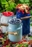 Świeżo zbierać dzikie jagodowe owoc w lecie Obrazy Stock