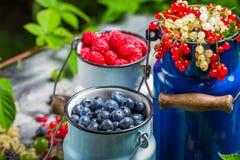 Świeżo zbierać dzikie jagodowe owoc w lecie Fotografia Stock
