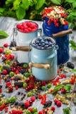 Świeżo zbierać dzikie jagodowe owoc w lecie Obraz Royalty Free