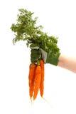 świeżo zbierać wiązek marchewki zdjęcie stock