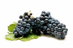 świeżo zbierali winogrona Obraz Royalty Free