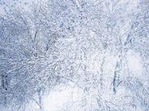 Świeży śnieg na drzewie fotografia stock