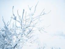 Świeży śnieg na drzewie zdjęcia stock