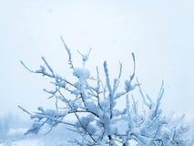 Świeży śnieg na drzewie obraz stock