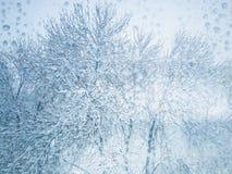 Świeży śnieg na drzewie zdjęcie royalty free