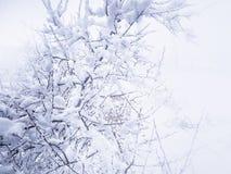 Świeży śnieg na drzewie obraz royalty free