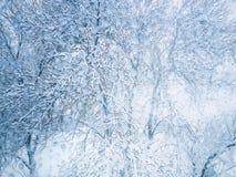 Świeży śnieg na drzewie obrazy stock