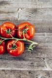 Świeży życiorys pomidor Obrazy Stock