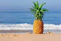 świeży ananas zdjęcia royalty free