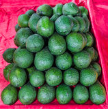 Świeży avocado Obrazy Stock
