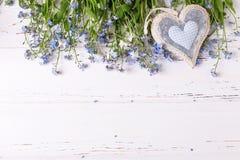 Świeży błękit ja, myosotis serce na whi lub kwiaty i Zdjęcie Royalty Free