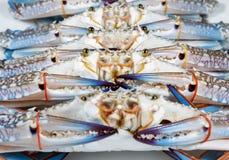 Świeży błękitny krab, wybór ostrość Zdjęcia Royalty Free