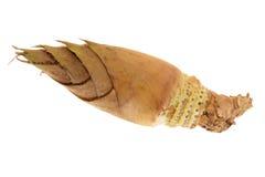 Świeży Bambusowy krótkopęd Obrazy Royalty Free