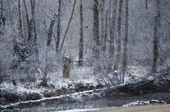 Świeży Biały opad śniegu Wzdłuż Zimnej zimy rzeki fotografia royalty free