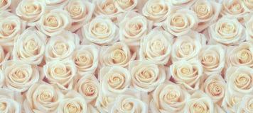 Świeży białych róż bezszwowy wzór obraz stock