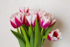 Świeży bukiet tulipany Fotografia Stock