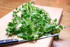 Świeży cilantro lub kolenderów ziele na ciapanie desce Zdjęcia Royalty Free