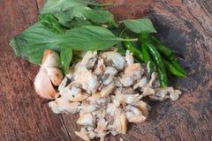 Świeży cockle Od morza Tajlandia i basilu liście Zdjęcie Royalty Free
