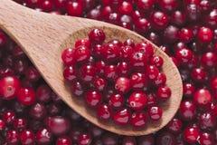 Świeży cranberry w drewnianej łyżce Zdjęcia Stock