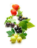 Świeży czarny rodzynek, agrest i truskawka, Obraz Royalty Free