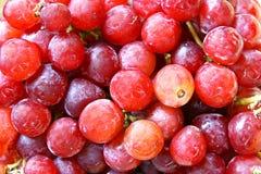 Świeży Czerwony kul ziemskich winogron tło Fotografia Stock