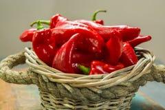 Świeży dojrzały czerwony słodki turecki pieprzowy przygotowywający jeść Obrazy Stock