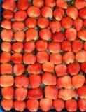 Świeży dojrzały czerwony truskawkowy naturalny owocowy tło Fotografia Royalty Free