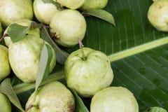 Świeży dojrzały guava na bananowym liścia tle Zdjęcia Stock