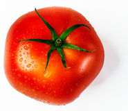 Świeży, dojrzały, pojedynczy pomidor, obrazy royalty free