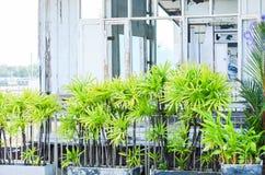 Świeży drzewa ogrodzenie oddziela zaniechanego rocznika styl i parka zdjęcia royalty free