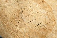 Świeży drzewnego fiszorka rżnięty tło lub tekstura Fotografia Royalty Free