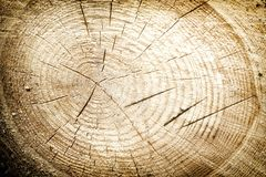 Świeży drzewnego fiszorka rżnięty tło lub tekstura Obraz Stock